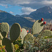 Prickly Pear Cactus And Mountains Poster