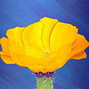 Prickly Pear Flower Poster