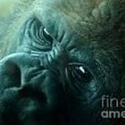 Primate Eyes Poster