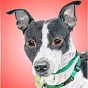 Princess - A Former Shelter Sweetie Poster