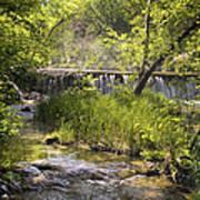 Pristine Forest Stream Poster