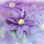 Profusion Of Purple Poster