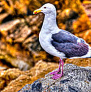 Proud Thayer Gull Poster