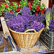 Provence Lavender Poster