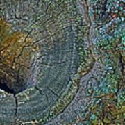 Pruned Limb On Live Oak Tree Poster