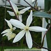 Psalm Eighteen Two White Clematis Poster