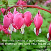 Psalms 27 14 Bleeding Hearts Poster by Sara  Raber