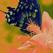 Psychadelic Butterflys Poster