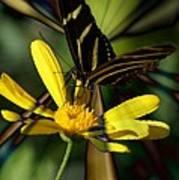 Psychadelic Zebra Butterfly Poster