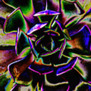 Psychedelic Rubber Plant Poster