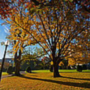 Public Garden Fall Tree Poster