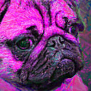 Pug 20130126v3 Poster by Wingsdomain Art and Photography