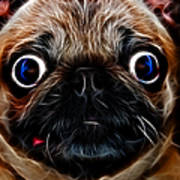 Pug Dog - Electric Poster by Wingsdomain Art and Photography