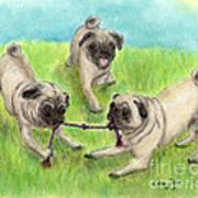 Pug Dog Playing Canine Animal Pets Art Poster