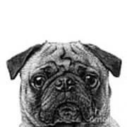 Pug Dog Square Format Poster