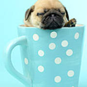 Pug In A Cup Poster by Greg Cuddiford