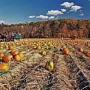 Pumpkin Field Poster