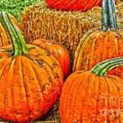 Pumpkin Poster by Baywest Imaging