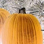 Pumpkin Patch - Photopower 1563 Poster