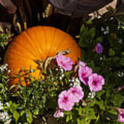 Pumpkin With Purple Flowers Poster