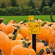 Pumpkins II Poster