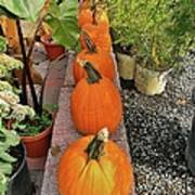 Pumpkins In A Row Poster