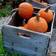 Pumpkins In Wooden Crates Poster