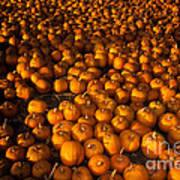 Pumpkins Poster by Ron Sanford