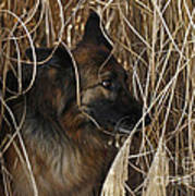 Pup Hiding In Tall Grass Poster