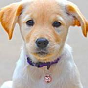 Pupp Poster