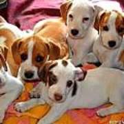 Puppy Crew Poster
