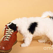 Puppy Dog With Head In Red Shoe Poster
