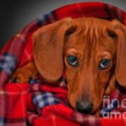 Puppy Love Poster