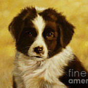 Puppy Portrait Poster by John Silver