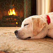 Puppy Sleeping By A Fireplace Poster
