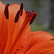Pure Orange  Poster