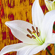 Pure White Lily Poster
