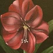 Purple Amaryllis Poster