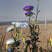 Purple And White Flowers In The Sun Poster