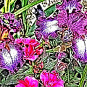 Purple And White Irises And Pink Flowers Poster