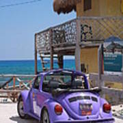 Purple Beetle Beachside Cozumel Mexico Poster