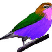 Purple Belly Warbler Poster