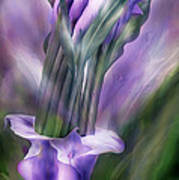 Purple Callas In Calla Vase Poster