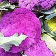 Purple Cauliflower Poster