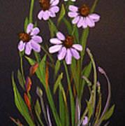 Purple Coneflowers Poster