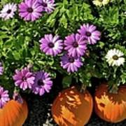 Purple Daisies And A Touch Of Orange Poster
