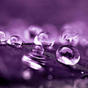 Purple Droplets Poster