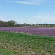 Purple Field Poster