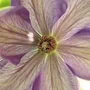 Purple Flower Poster by Thomas Leon