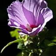 Purple Flower With Dark Background Poster